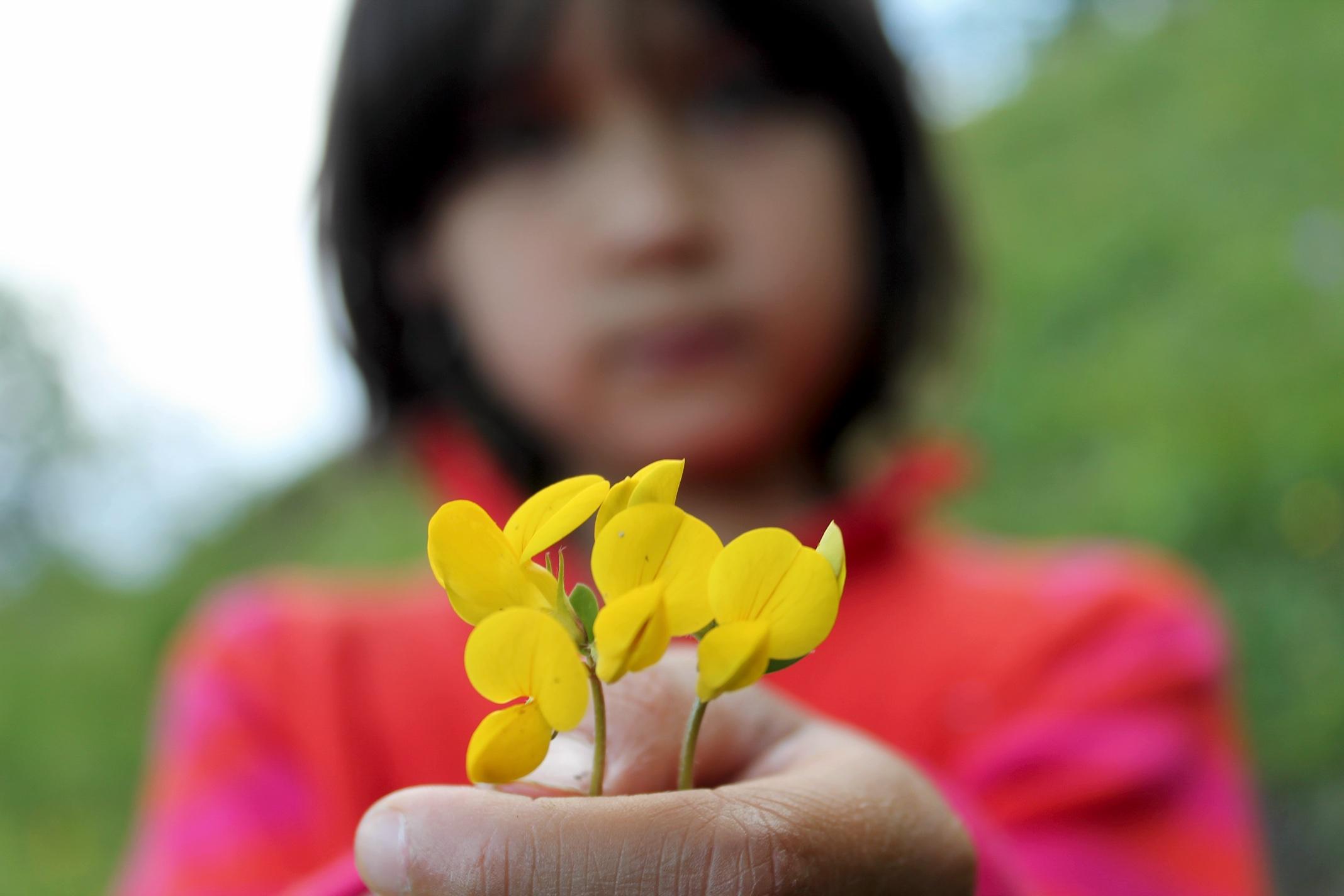 Ayah på fjellet Vetten med blomster